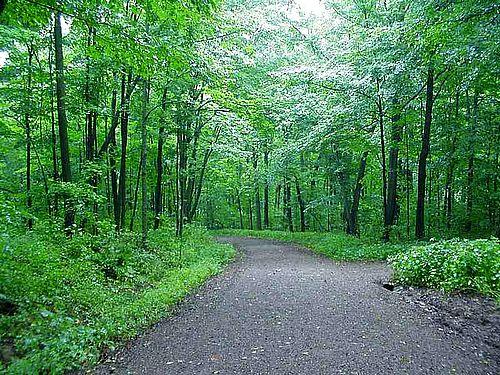 Road in woods med